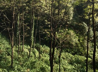 dharmalaya-retreat-5.jpg