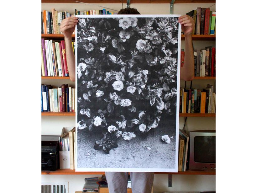 Debbie Carlos Flowers Print