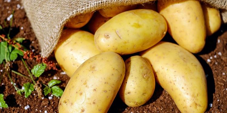 Hoe de Friese aardappel in India belandde