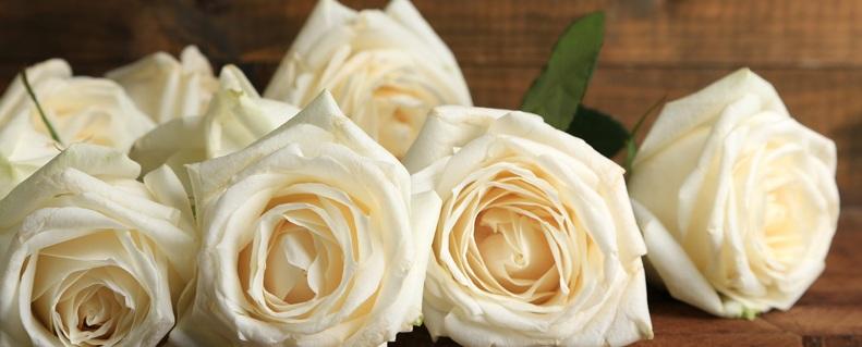 Rosas-blancas-cual-es-su-significado-copia.jpg