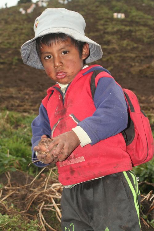 """3-åring """"potatispojke"""" i norra Ecuador."""