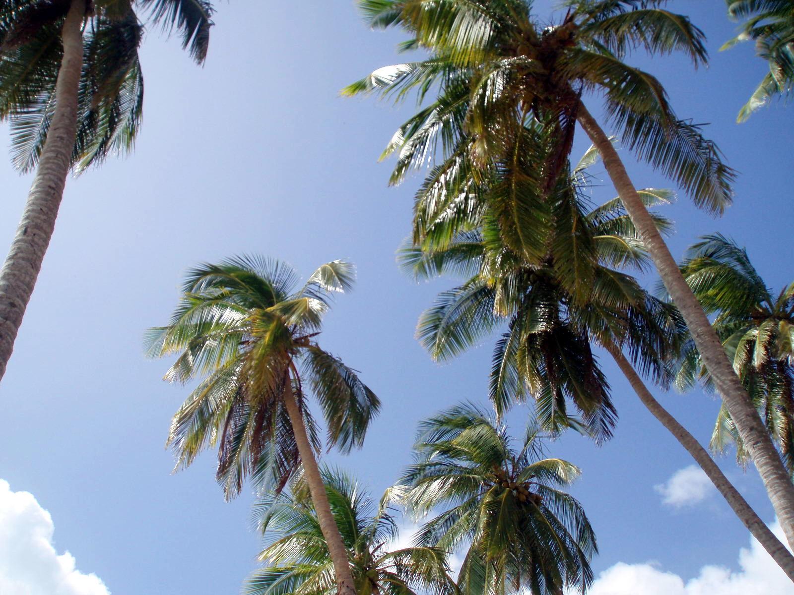 sanna_rosell_colombia_palms.JPG