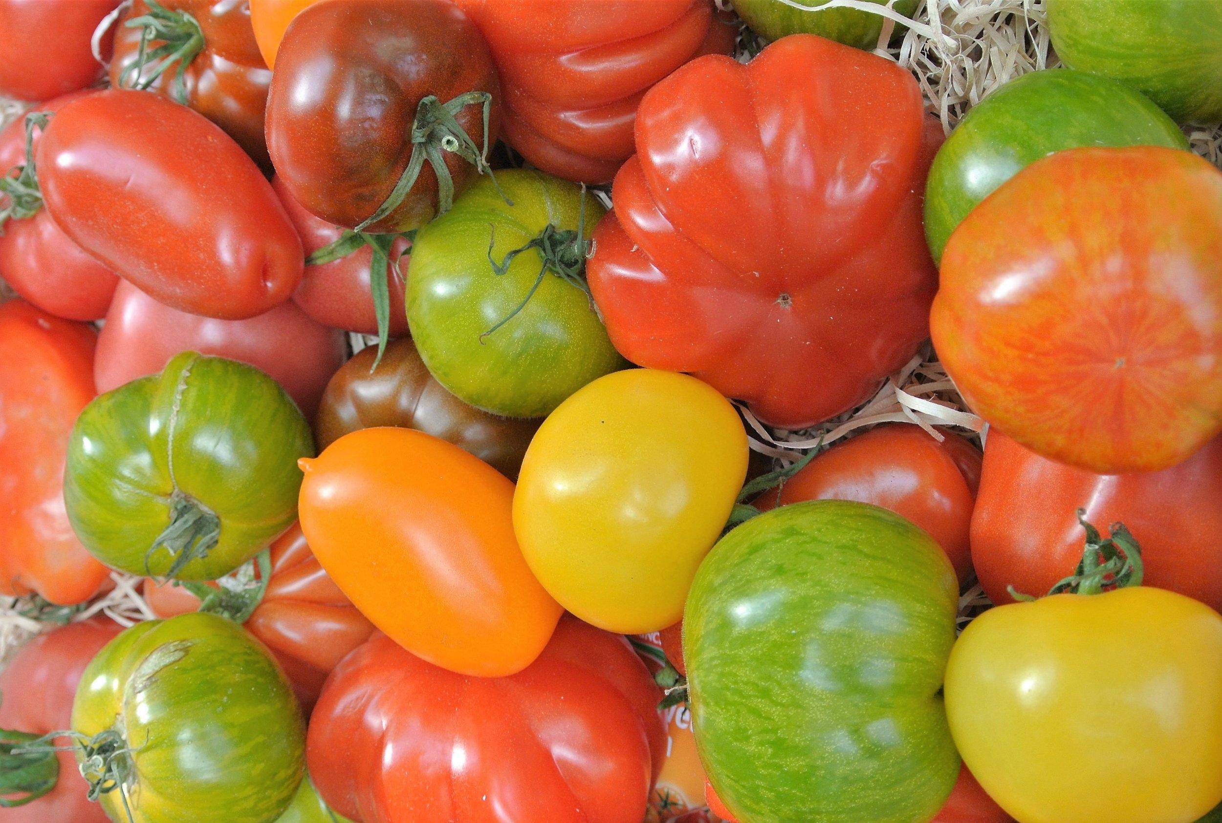 tomatoes_sannarosell