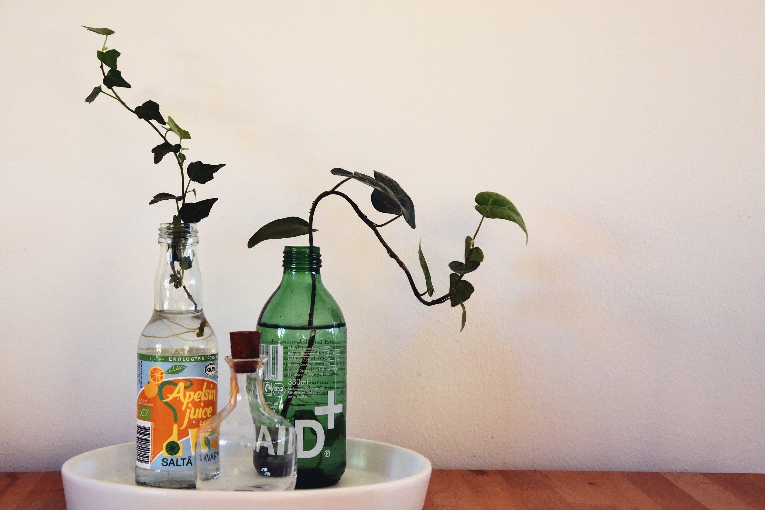växter.jpg