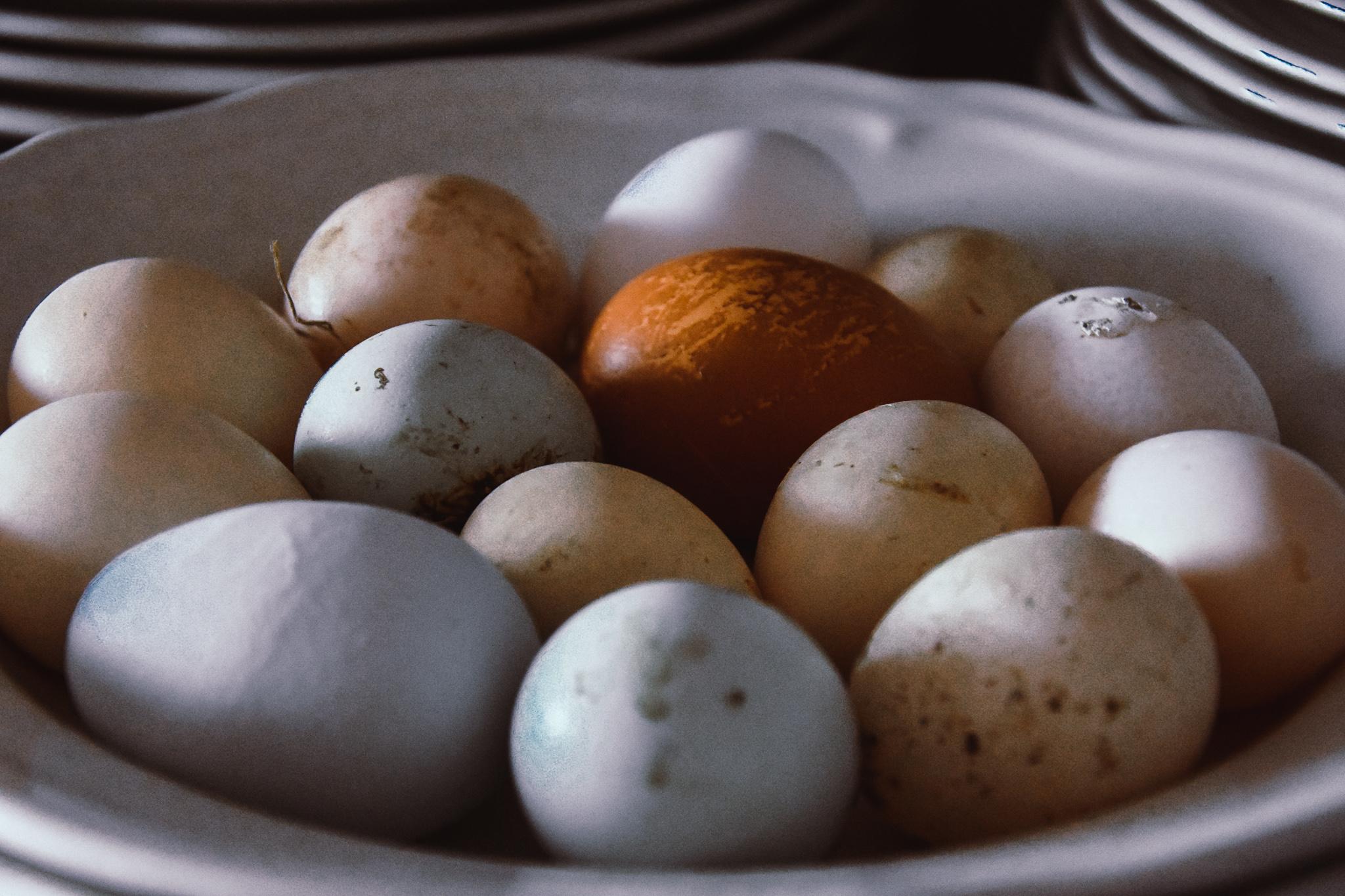 De små äggen kallas prinsessägg och läggs av unga hönor