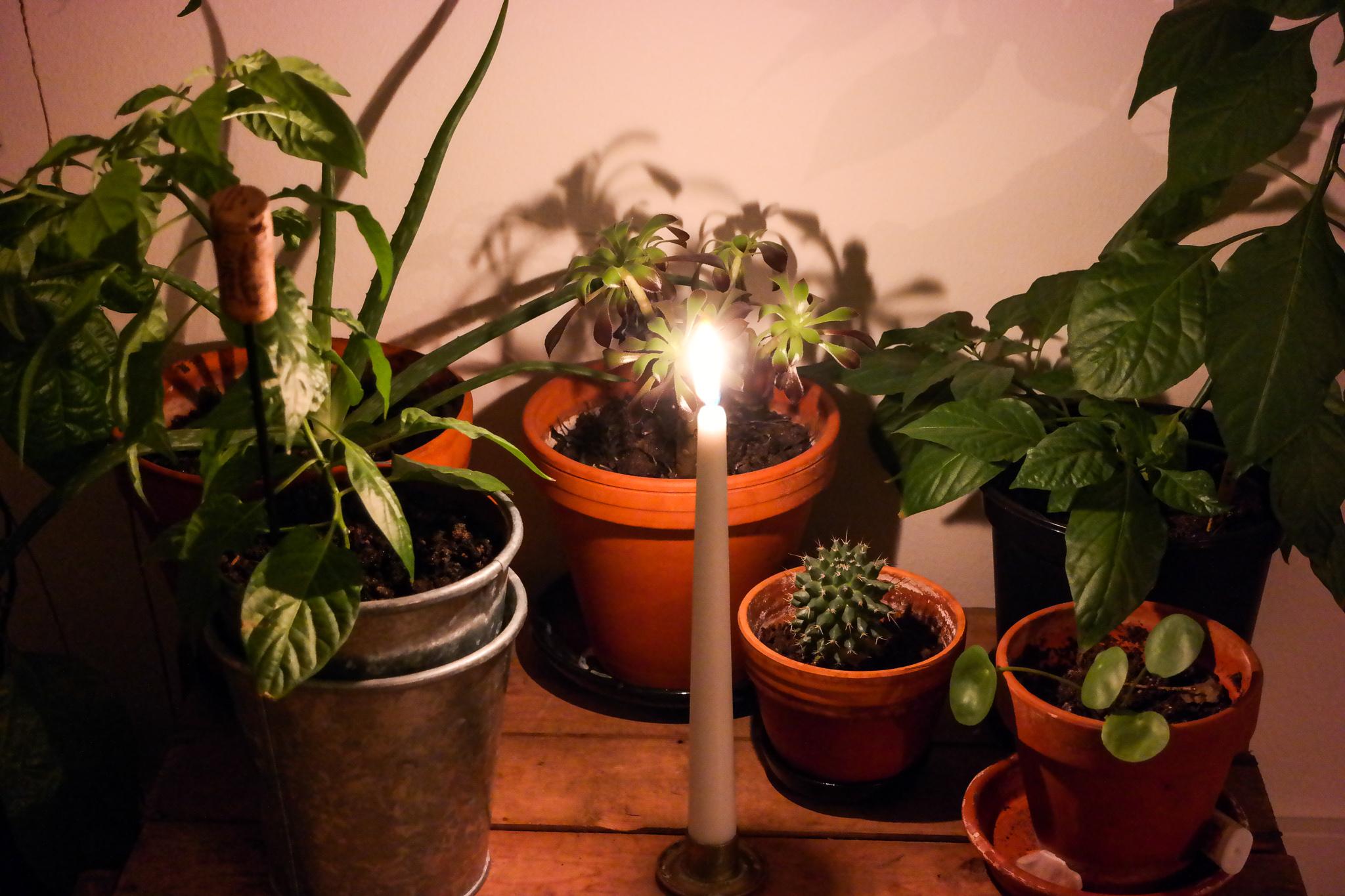 växter-inomhus.jpg