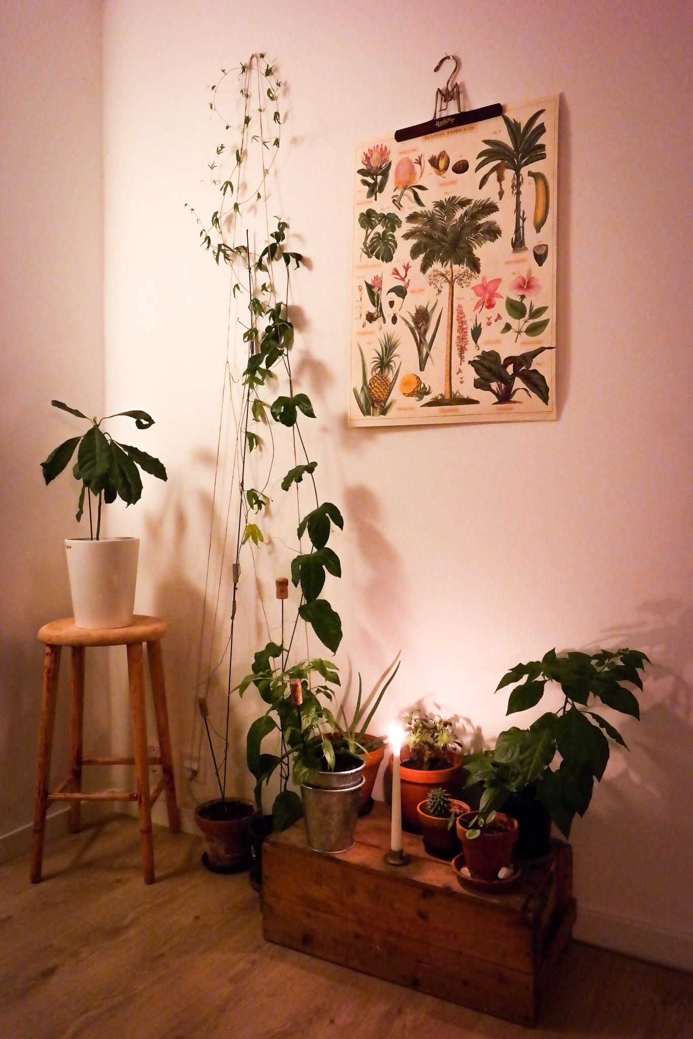 växter-hemma.jpg