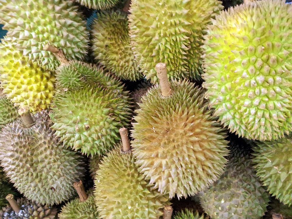 Durianfrukter.