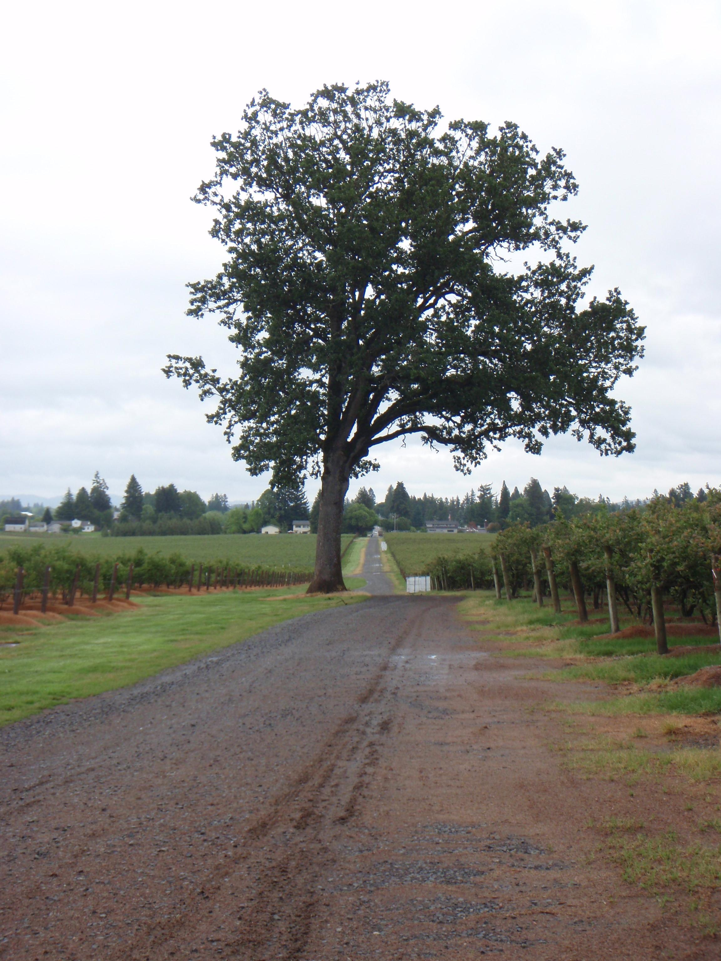 Forest Hills Frams--pretty road 5-24-13 3.JPG