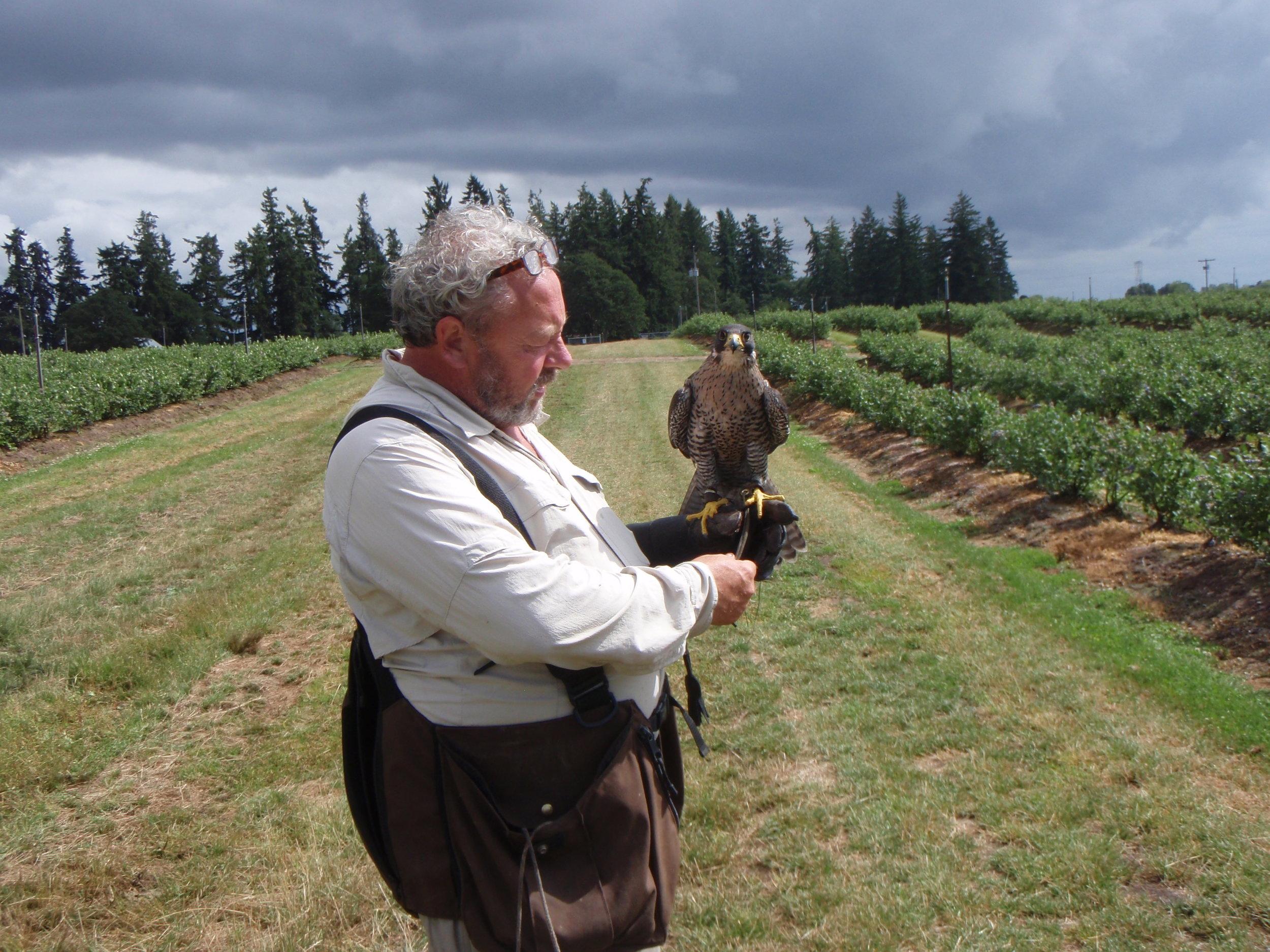 Falconer with bird 6-25-13.JPG
