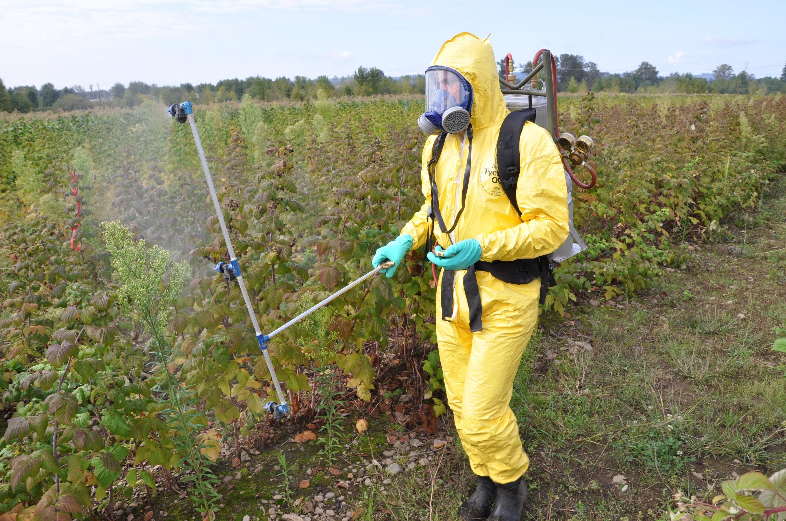 SWD Field Trials 2010 backpack.jpg