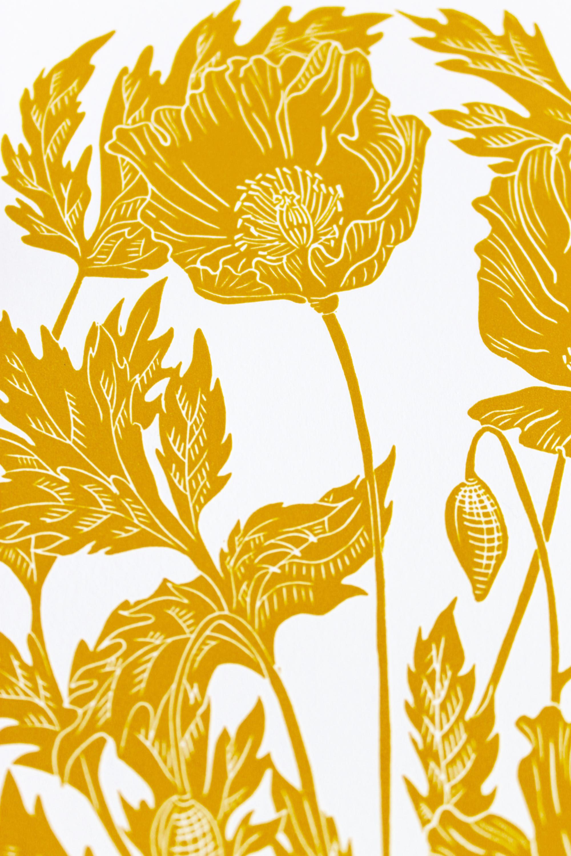 Poppies 4.jpg