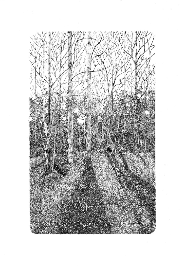 Claire+Leach+-+Shadows+in+Micheldever+Wood.jpg
