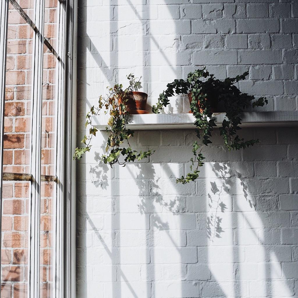 Plants on a shelf on a white brick wall.jpg