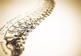 colonnavertebrale