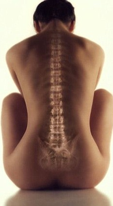 Woman spine.jpg