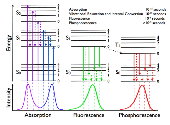 Figure 1. Jablonski diagram and spectra showing the fundamental photophysical processes in organic molecules: absorption of a photon (      S  0  >  S  1  ,  S  2      ), internal conversion (      S  2  >  S  1      , non-radiative), fluorescence (      S  1  >  S  0      ), intersystem crossing (      S  1  >  T  1      ) and phosphorescence (      T  1  >  S  0      ).