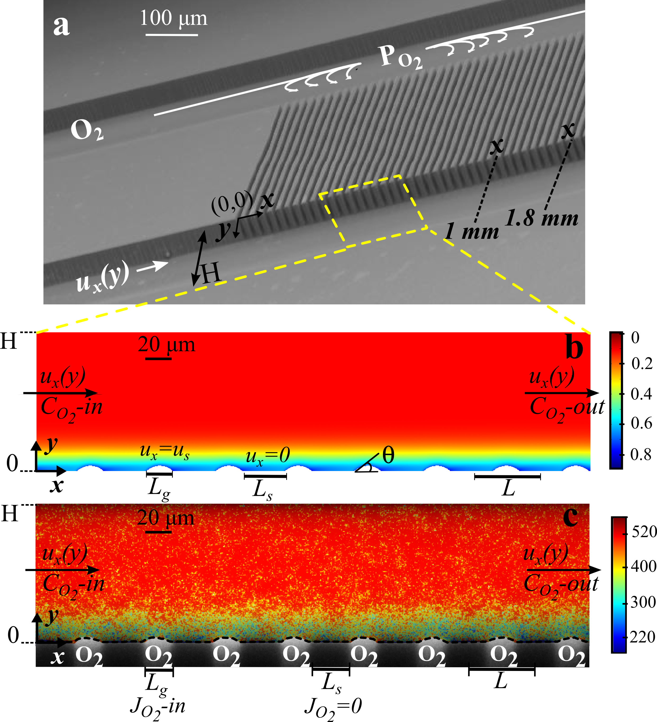 Figure 1. Microfluidic bubble mattress (a). Numerical simulations of dissolved oxygen in water with identical settings in FLIM experiments (b), the color bar shows the oxygen concentration. Lifetime field resolved by FLIM superimposed on the bright-field microscopy image showing bubbles protruding into the water (c), the color bar indicates fluorescence lifetime in nanoseconds.