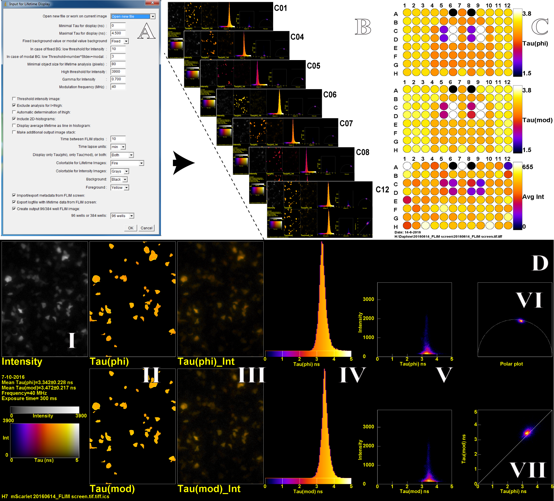 Figure 2 . An ImageJ macro (A) allows to set several processing and display parameters and generates a TIF stack with display figures for all wells present in the hyperstack (B) and a 96-well layout with the mean lifetime data (C). A detailed FLIM analysis from one well (D), the TIF stack (B) containing an extensive FLIM analysis of each well. The multi-panel D contains: grayscale (I), lifetime false color images (II), lifetime false color image with intensity overlay (III), a lifetime histogram (IV), a scatterplot of the lifetime versus the intensity (V), the polar plot (VI) and a scatterplot of phase (phi) versus modulation (mod) lifetime (VII).