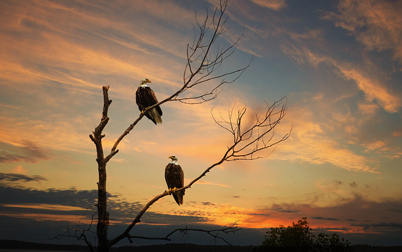 I22C0303 eagles.jpg