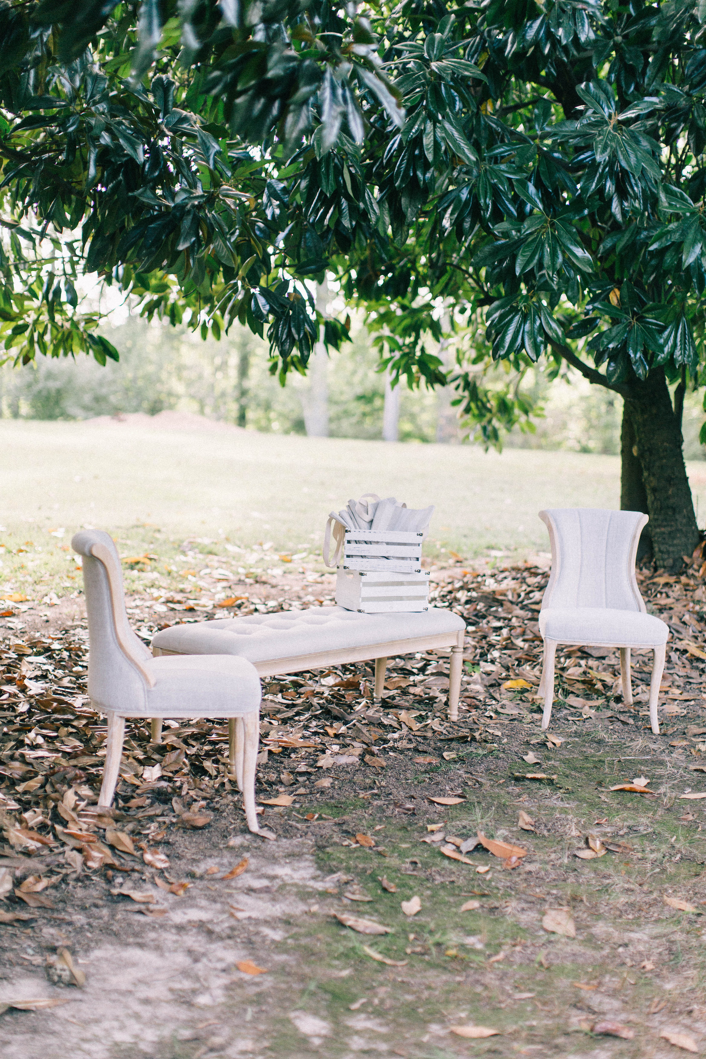 Seating area under magnolia trees.