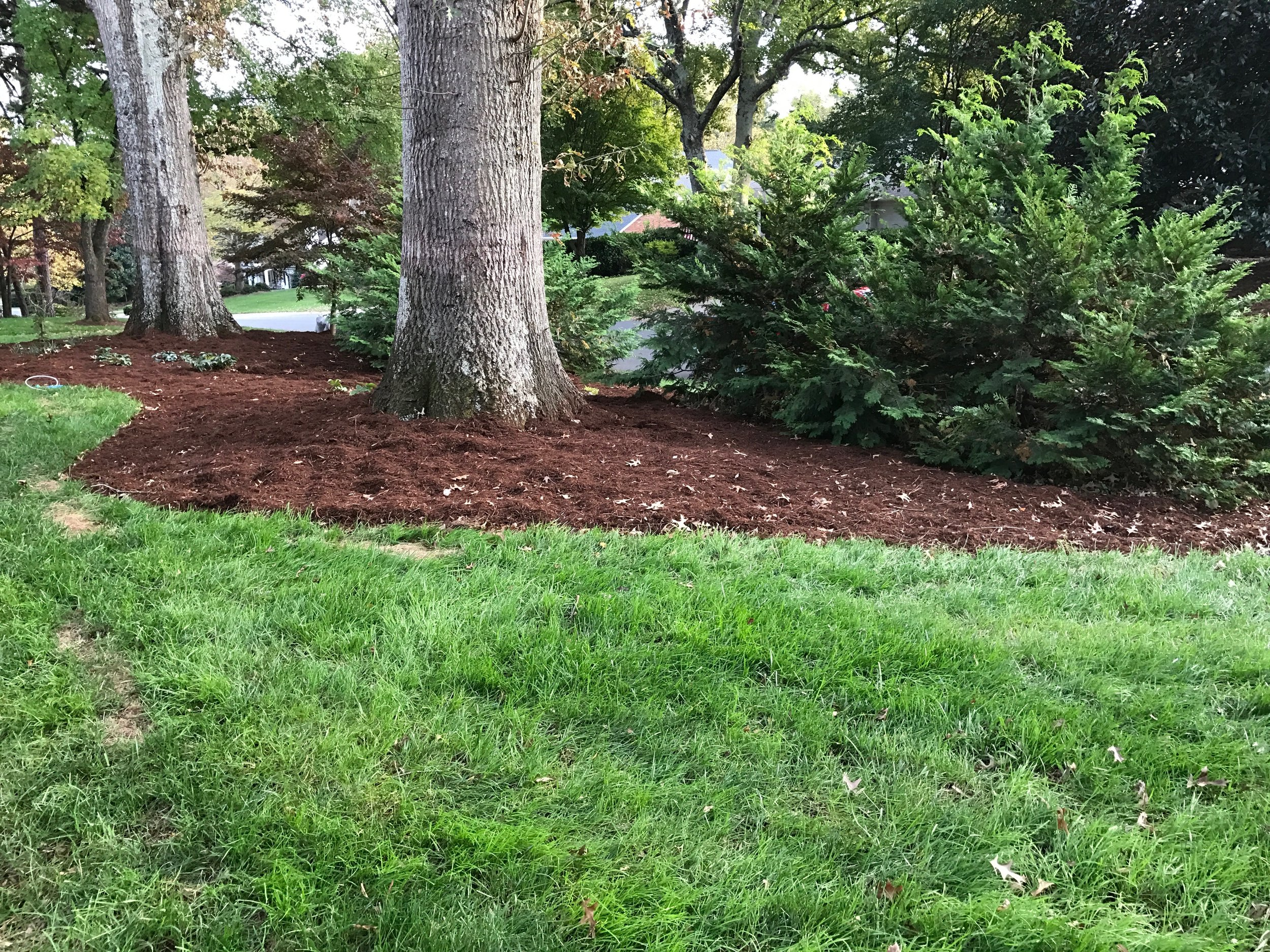 This is a recent mulch installation. This mulch is 100% natural—no additives, no dyes.
