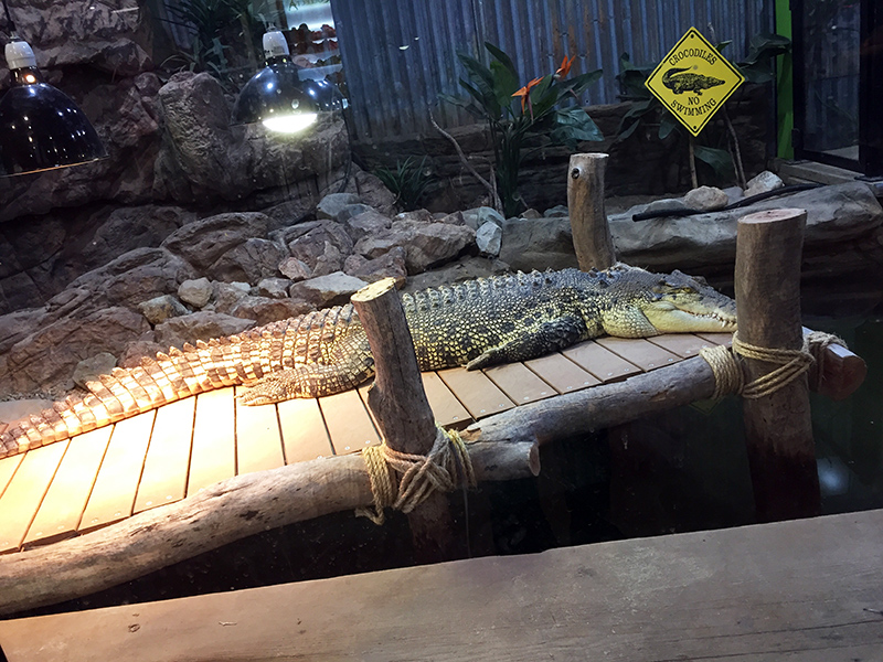 Visit to the Canberra Reptile Zoo