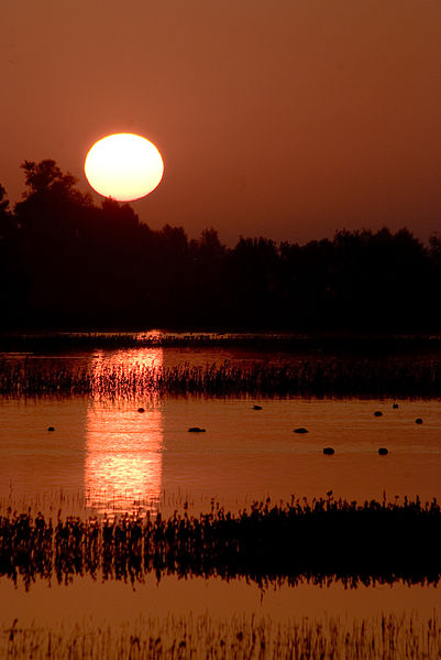 401px-Orange_sunset_at_Sacramento_National_Wildlife_Refugeo.jpg