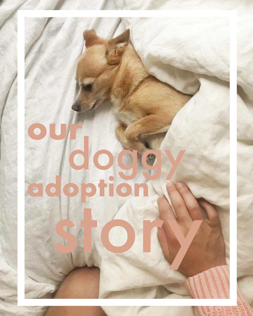 dog adoption rescue story