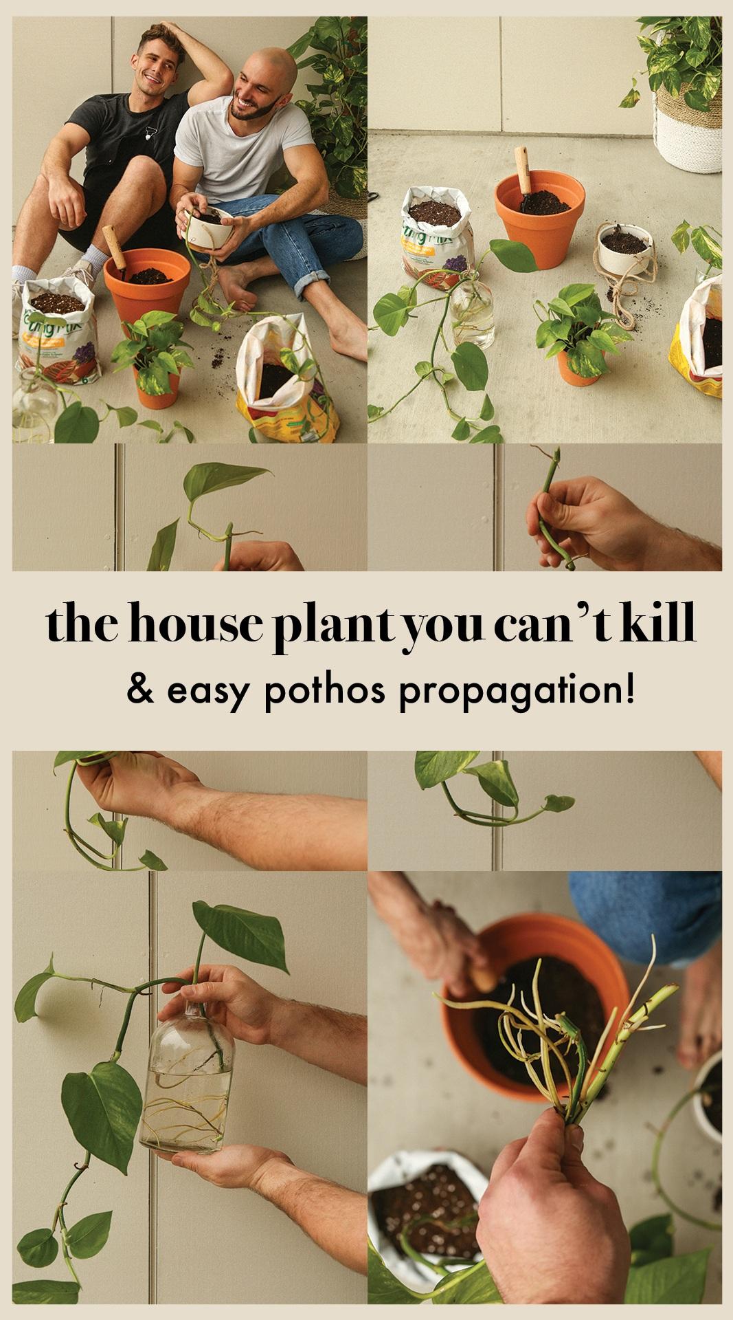 easiesthouseplant.jpg