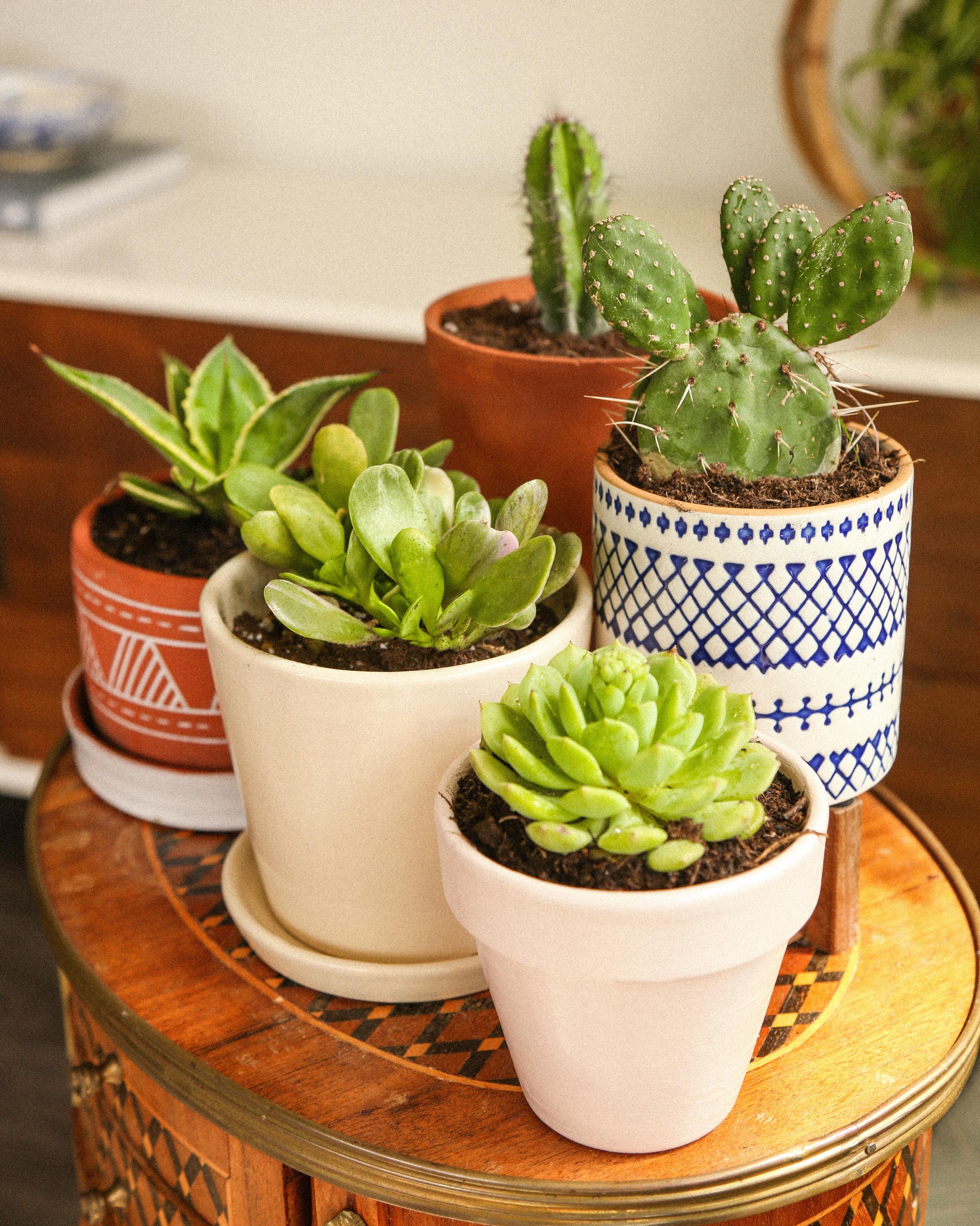 petite planters, succulent planters