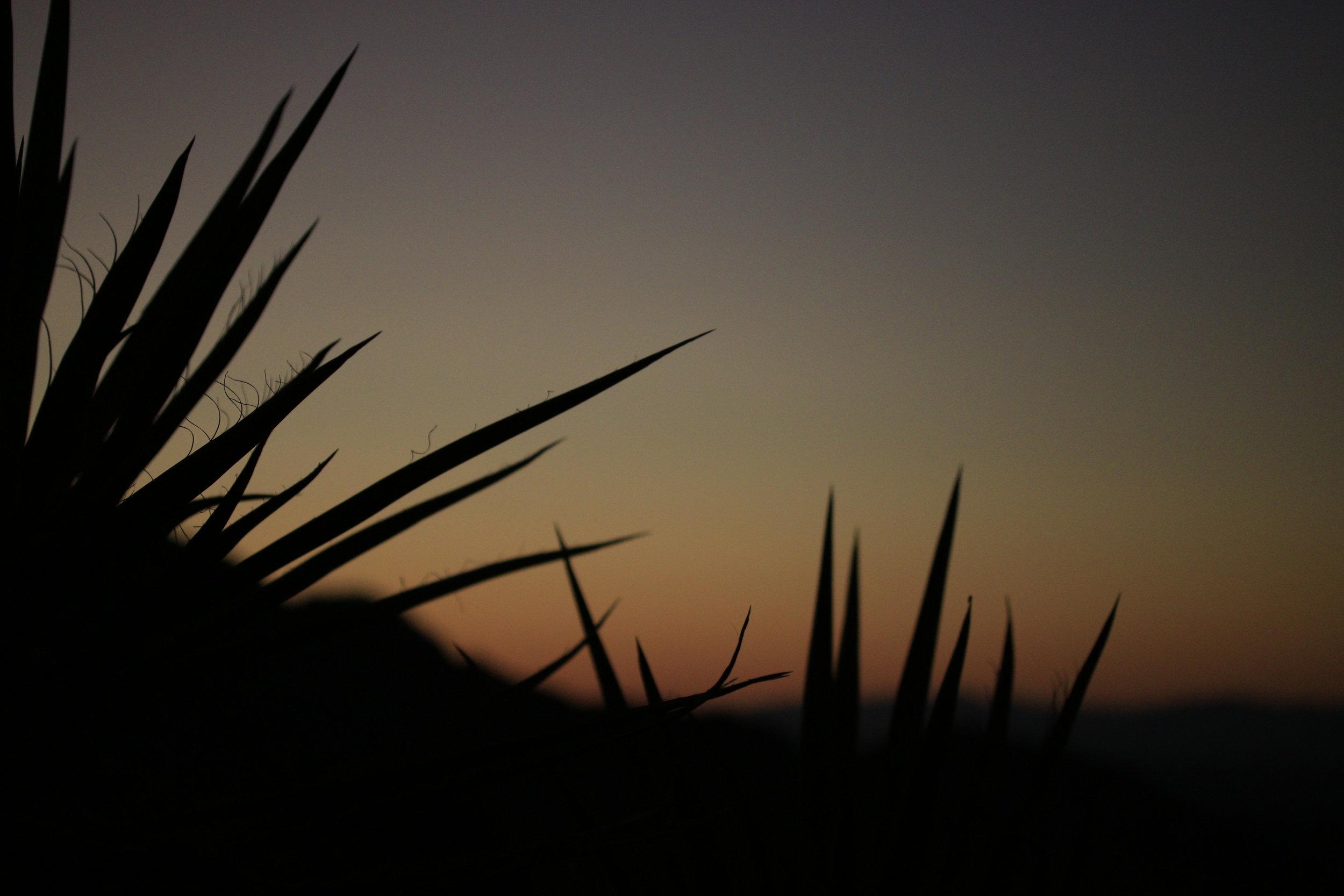 Image by Pirinola Creaciones©