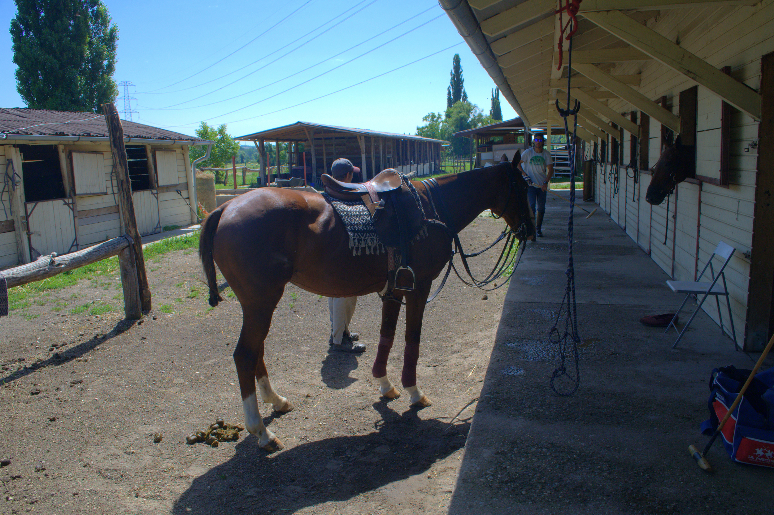 The stables at the Hungarian Polo Club.