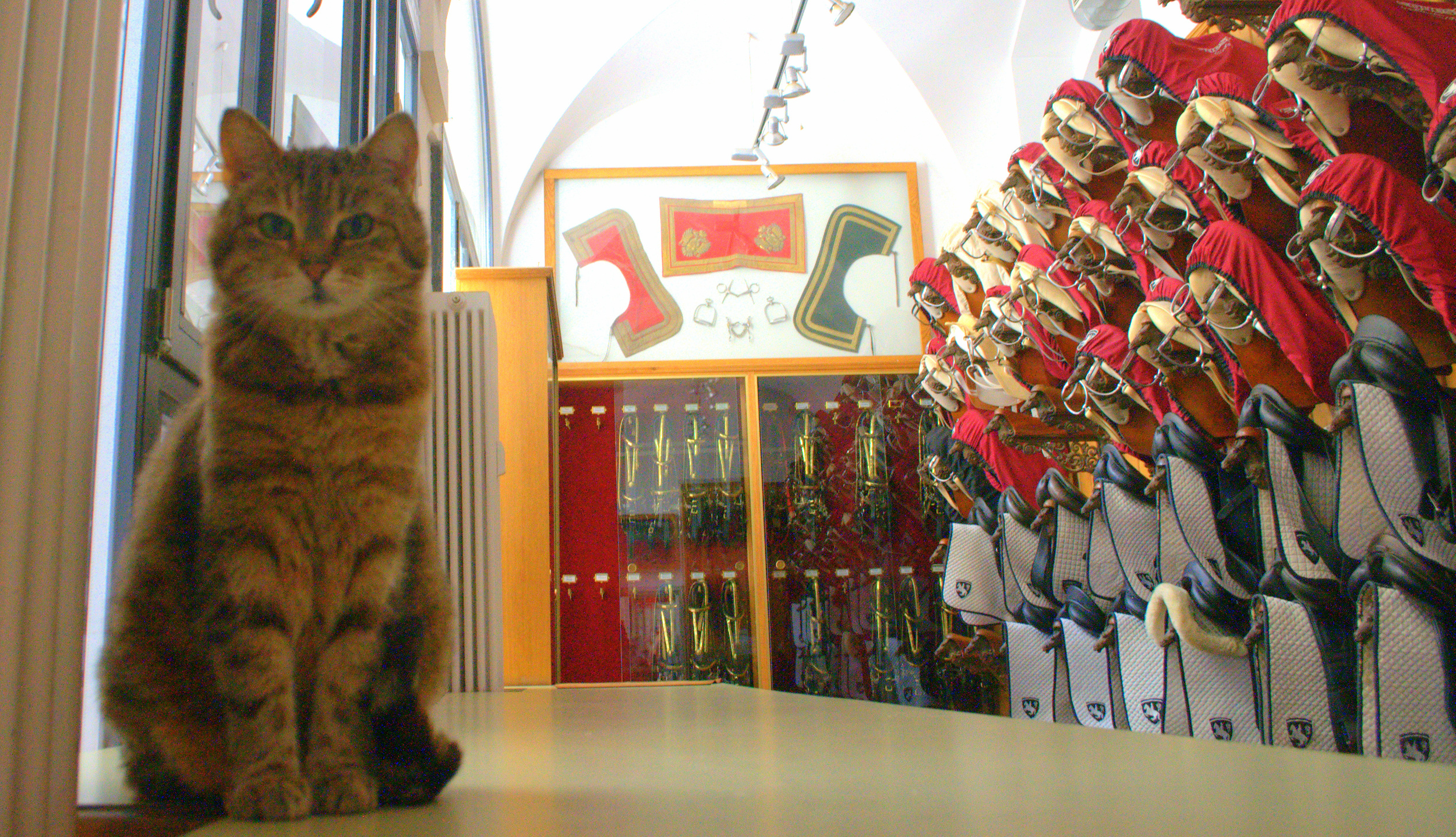 Mausi, the resident cat at the Spanish Riding School.