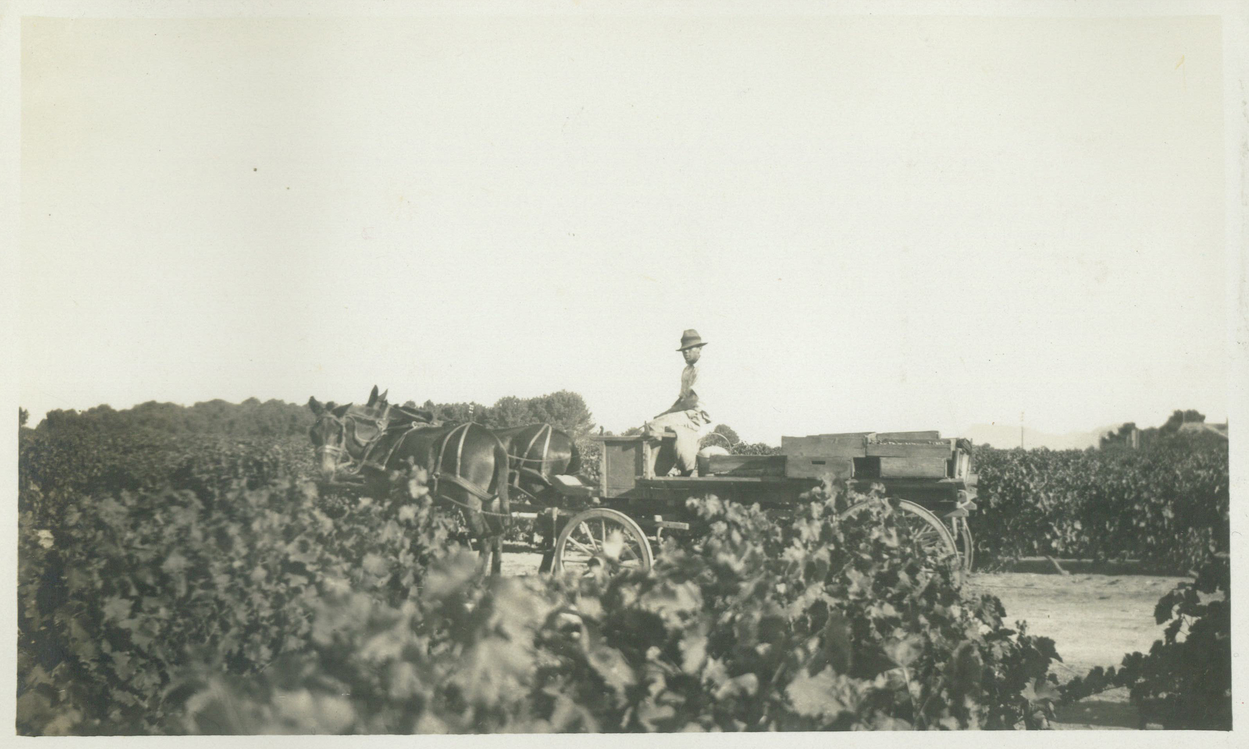 Feb 1931 - Fetching Grapes.jpg