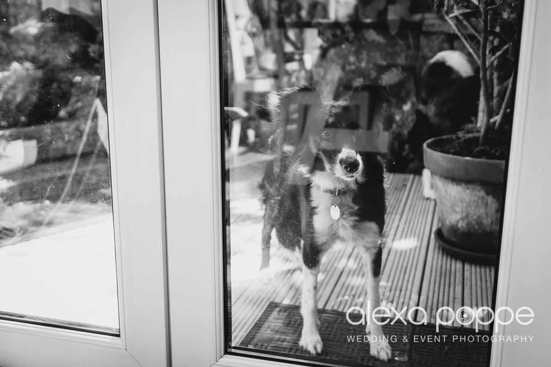 HP_wedding_stives-12.jpg