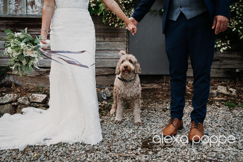 AA_wedding_thegreen_cornwall_34.jpg