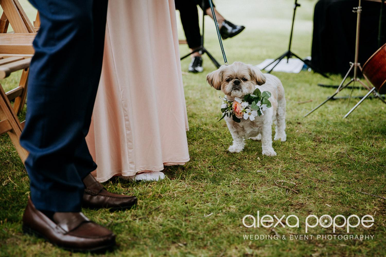 CP_wedding_thegreen_cornwall_29.jpg