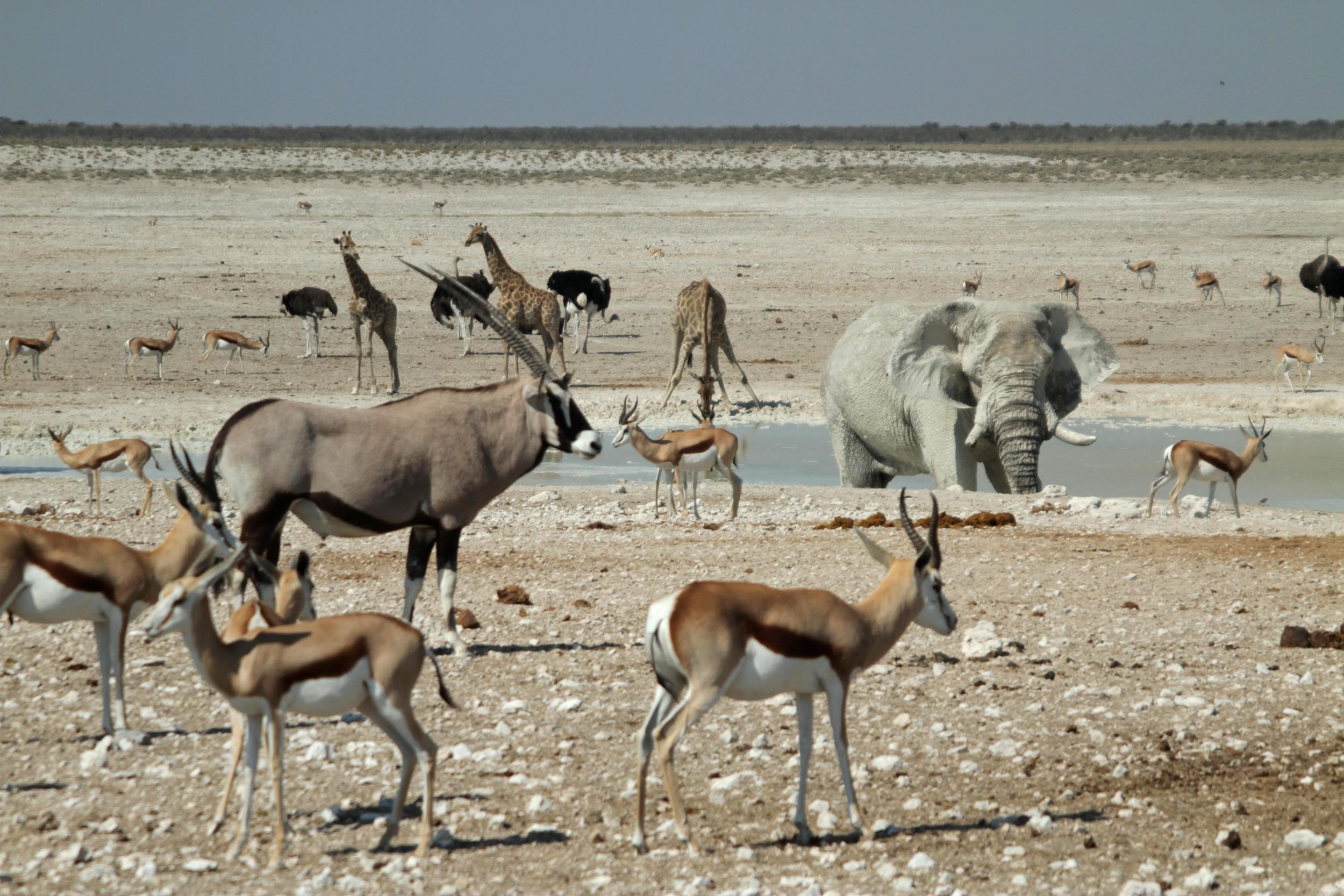 Namibia overland land rover cornwall (18).JPG