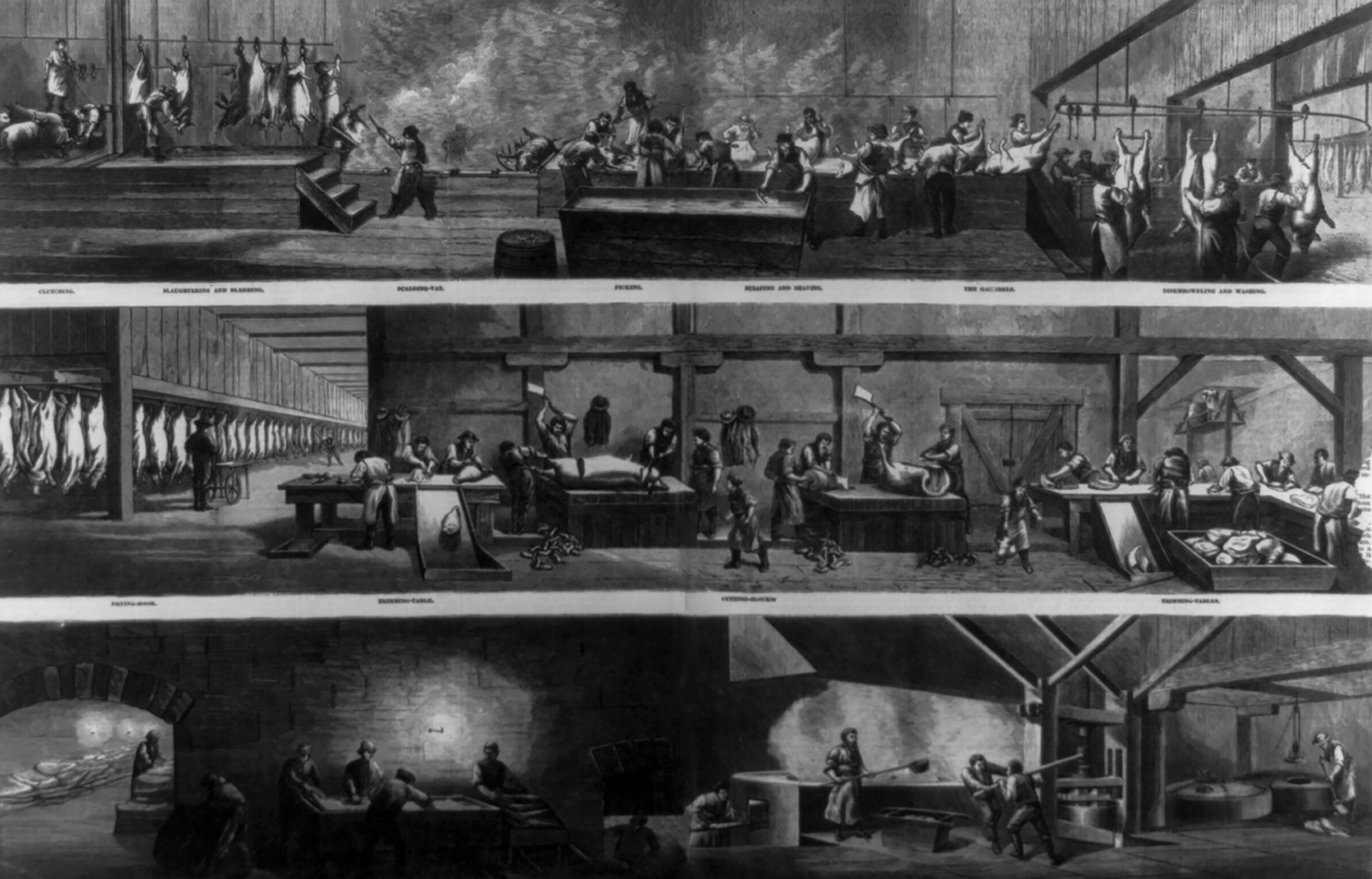 Hog-slautering and pork-packing in Cincannati, 1873, (Courtesy of the Lirbary of Congress)