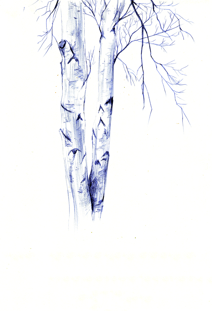 fig. 6. Birch tree ballpoint pen drawing