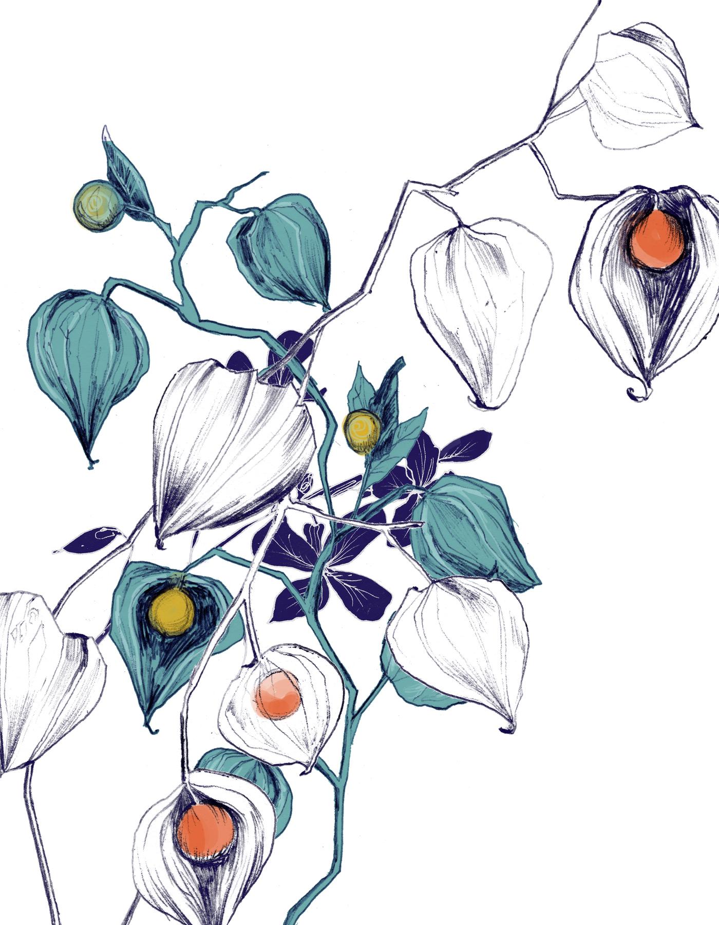 fig. 1. Drawings