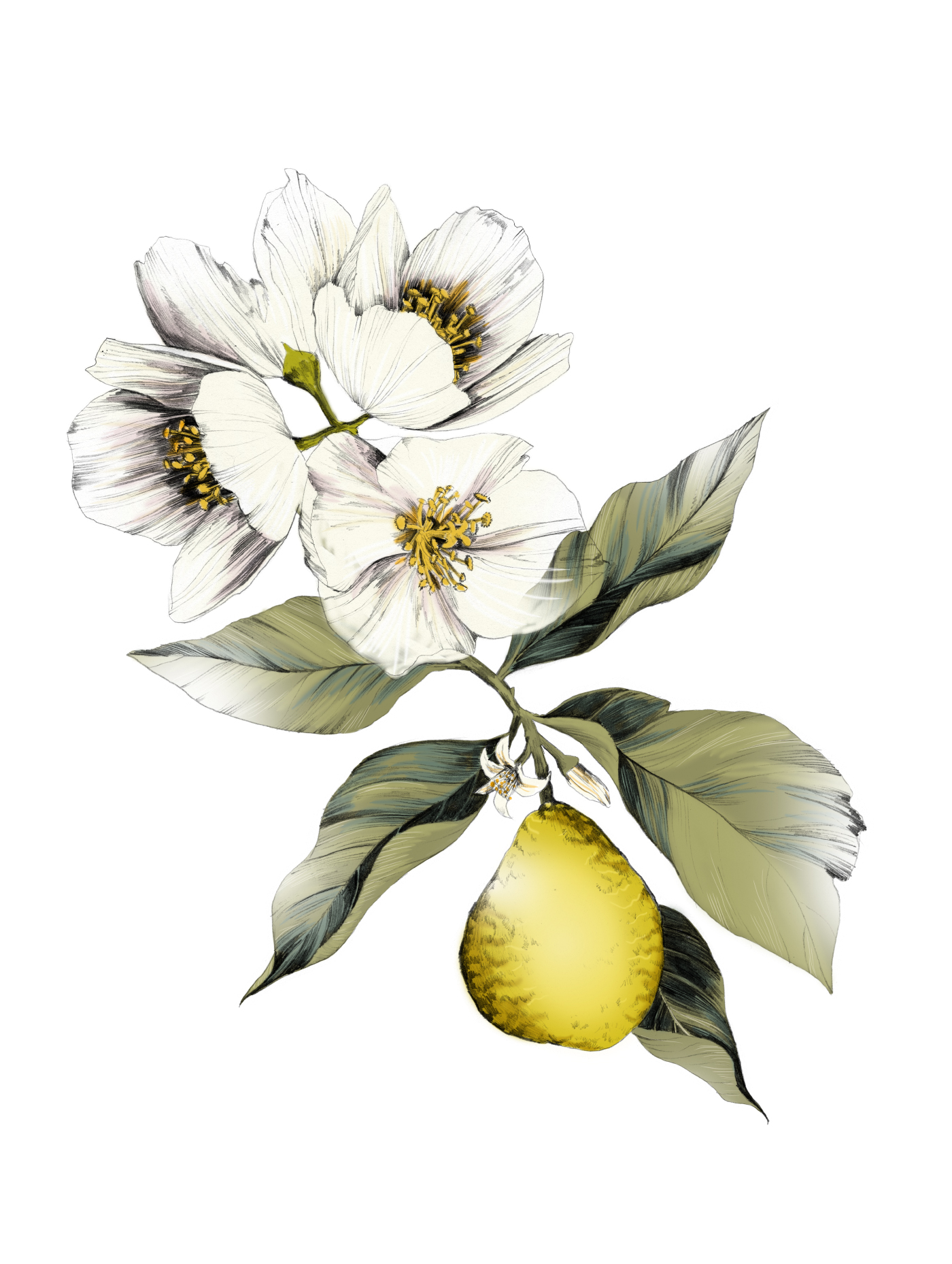 fig. 3. Illustration: flowers and fruit