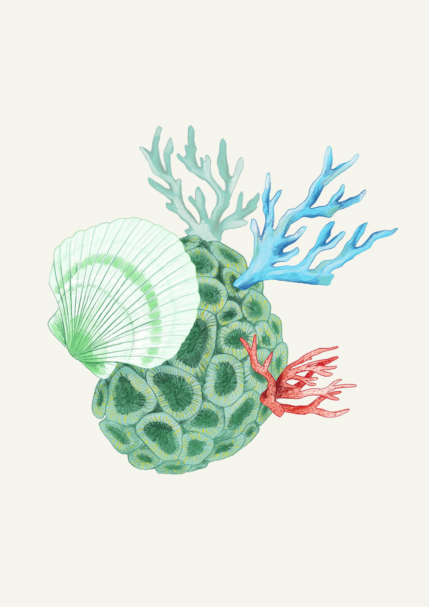 fig. 2. Coral element illustrations