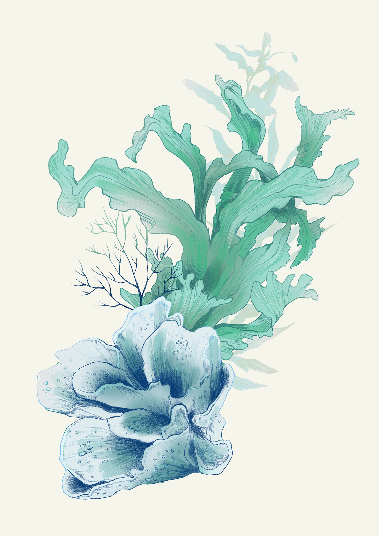 fig. 8. Coral illustration elements