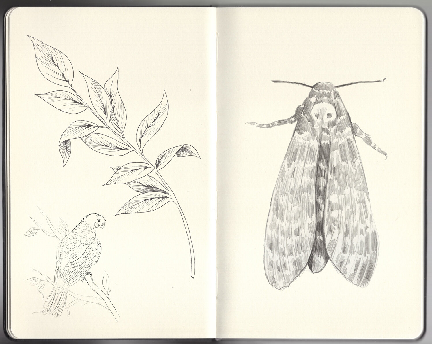 LASC_Personal_Sketchbook_2019_01_Pagina_15.jpg