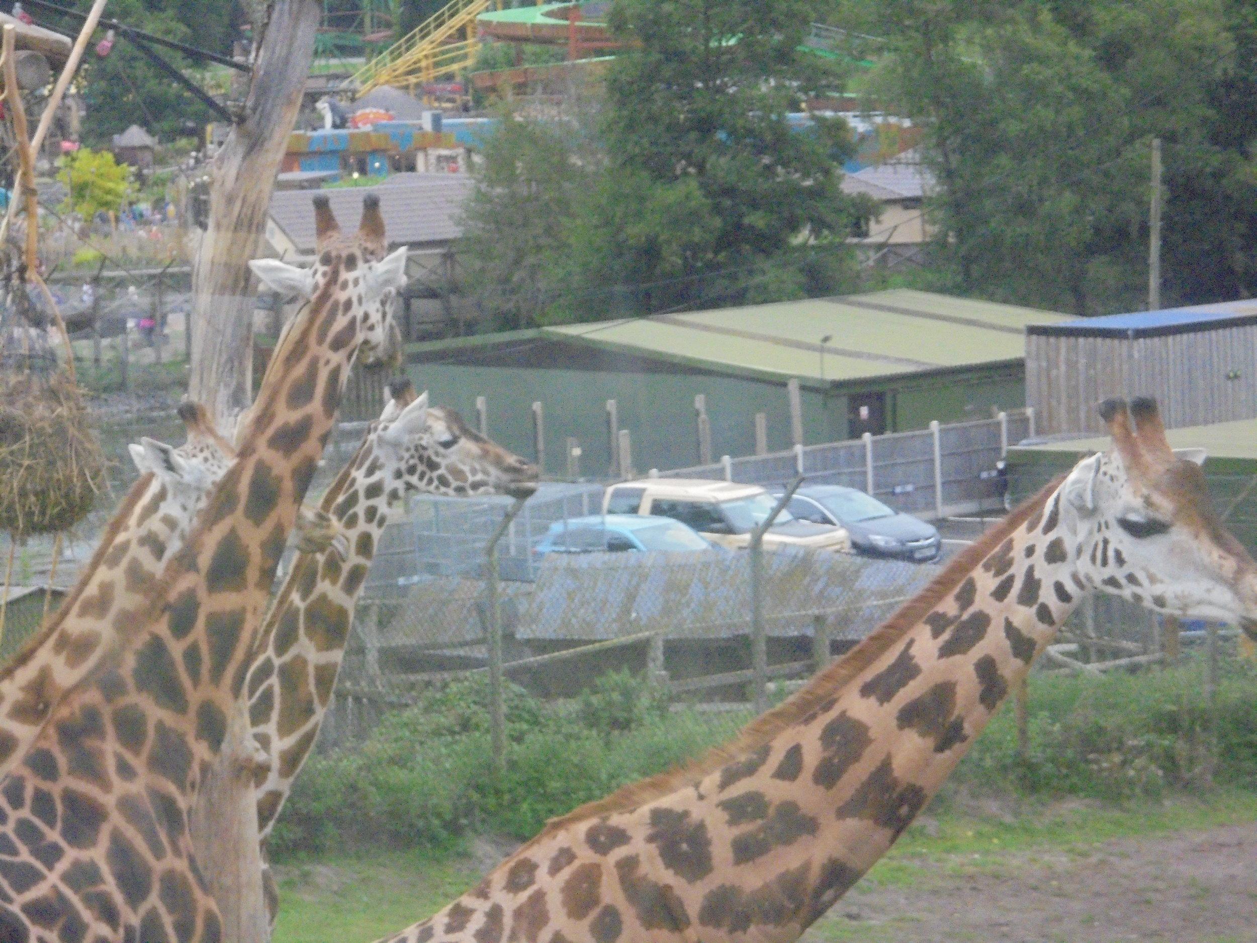 Safari Park 5.JPG