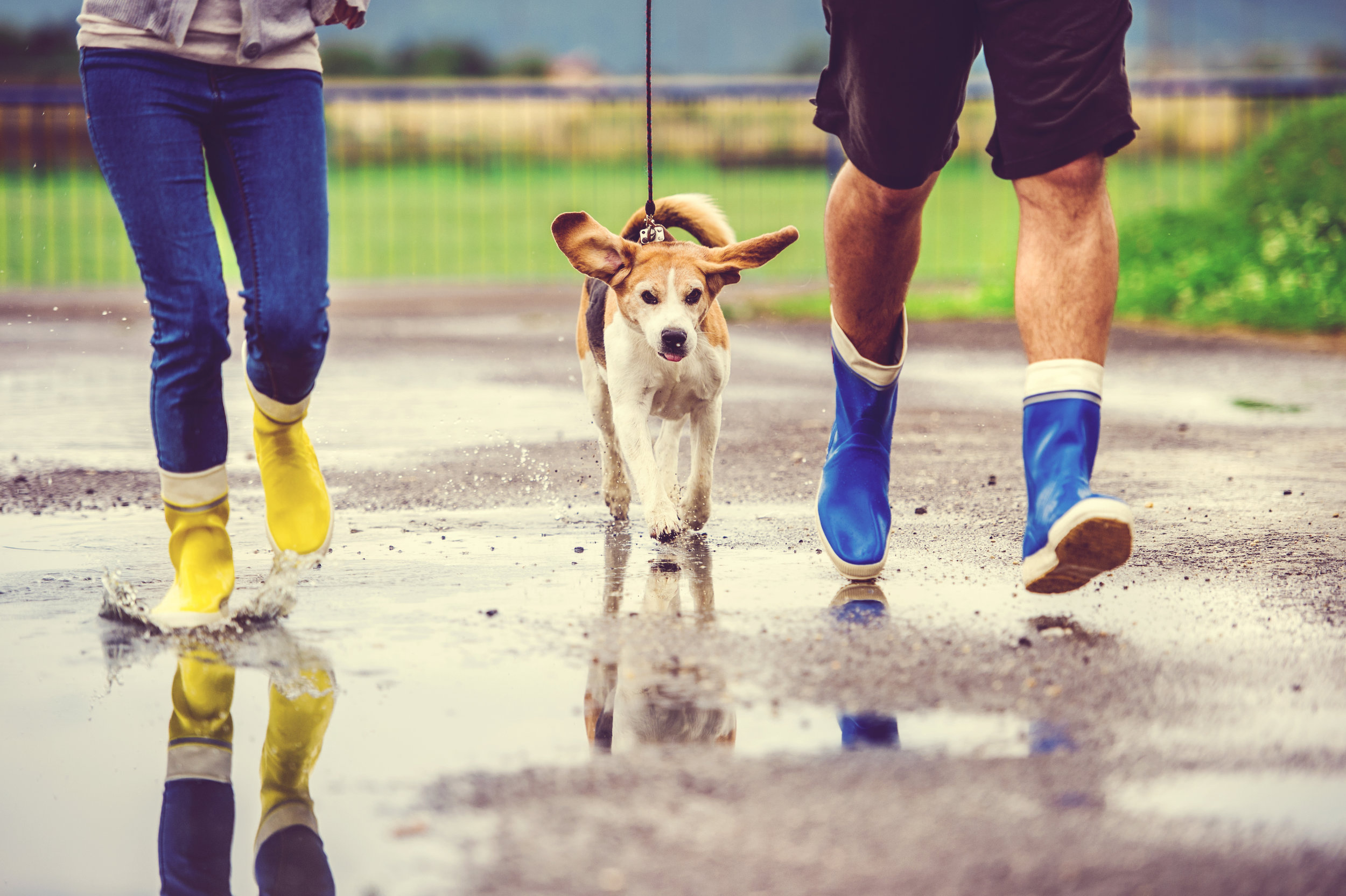 graphicstock-young-couple-walk-dog-in-rain-details-of-wellies-splashing-in-puddles_B0Z7qYv3--.jpg