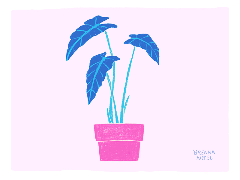 BN-Dribbble-houseplant7.jpg