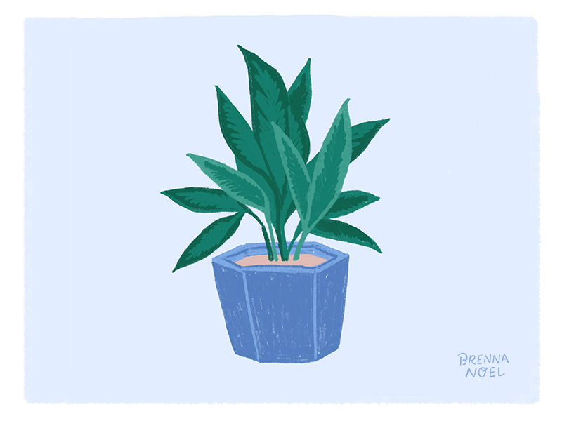 BN-Dribbble-Houseplant6.jpg